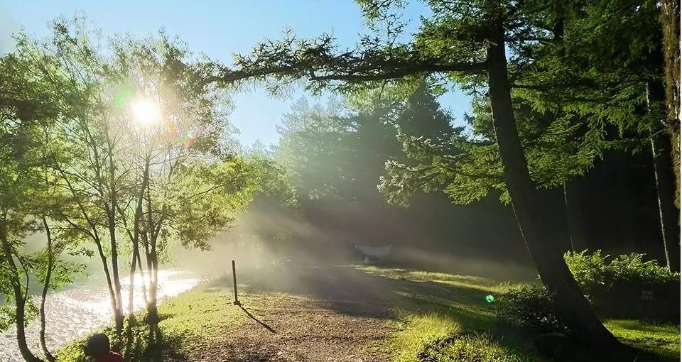 幻想的な朝の森