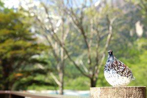白樺荘オリジナルの雷鳥
