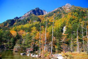【秋の特別企画 Vol.1】ネイチャーガイドが案内する秋の明神池散策ツアー